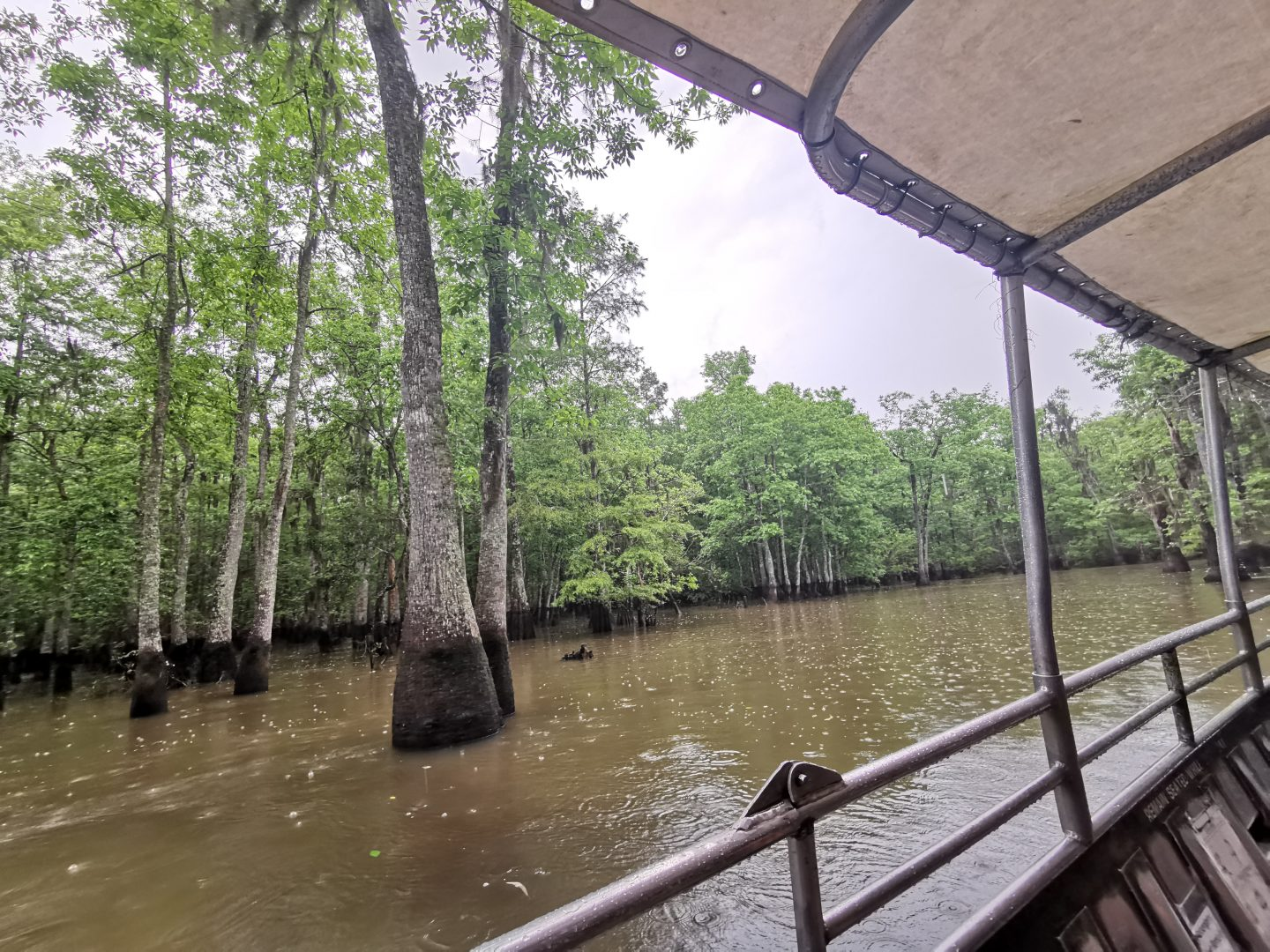 HAYLEYXMARTIN | TREK AMERICA GRAND TREK | DAY 9: LOUISIANA | HONEY ISLAND SWAMP TOUR